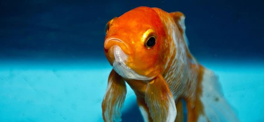 how to fix a noisy aquarium filter and pump system